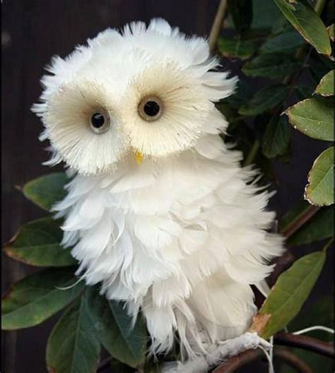Pin by Stephanie on Pets   Animals beautiful, Pet birds