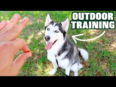 Seasonal Fall Pet Health Safety Tips | ActivPhy