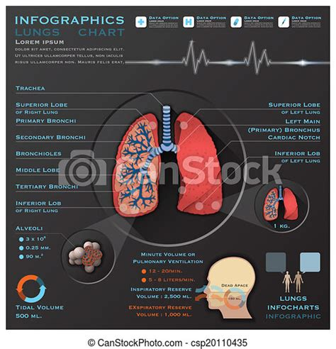 Vectors of Lungs And Respiratory System Medical