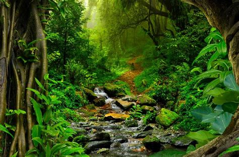 Interesting Amazon Rainforest Facts - Serious Facts