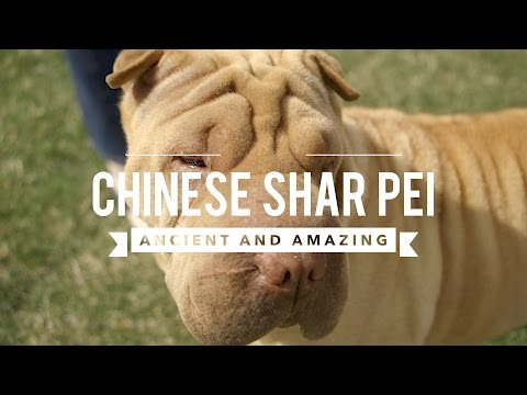 11 Unusual And Unique Dog Breeds From China