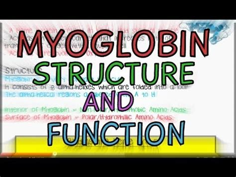 Myoglobin - Structure and Function - YouTube
